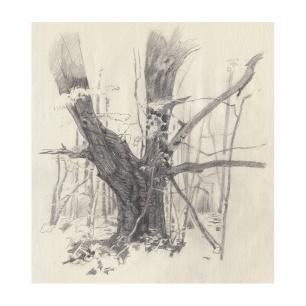 34 Oak