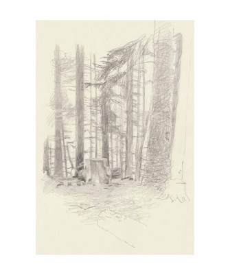 78 Forest, Mogollon